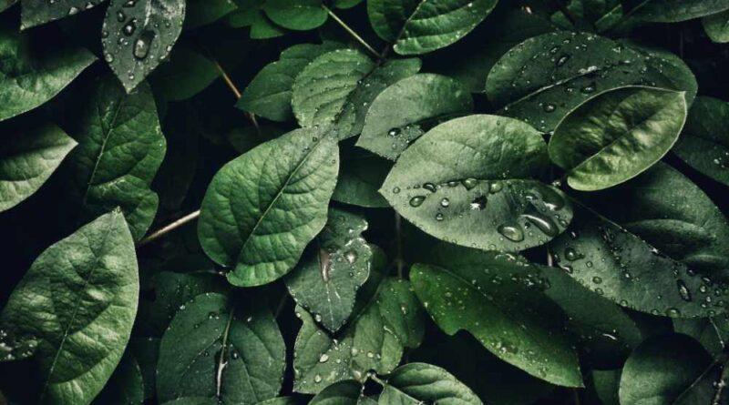 come innaffiare le piante